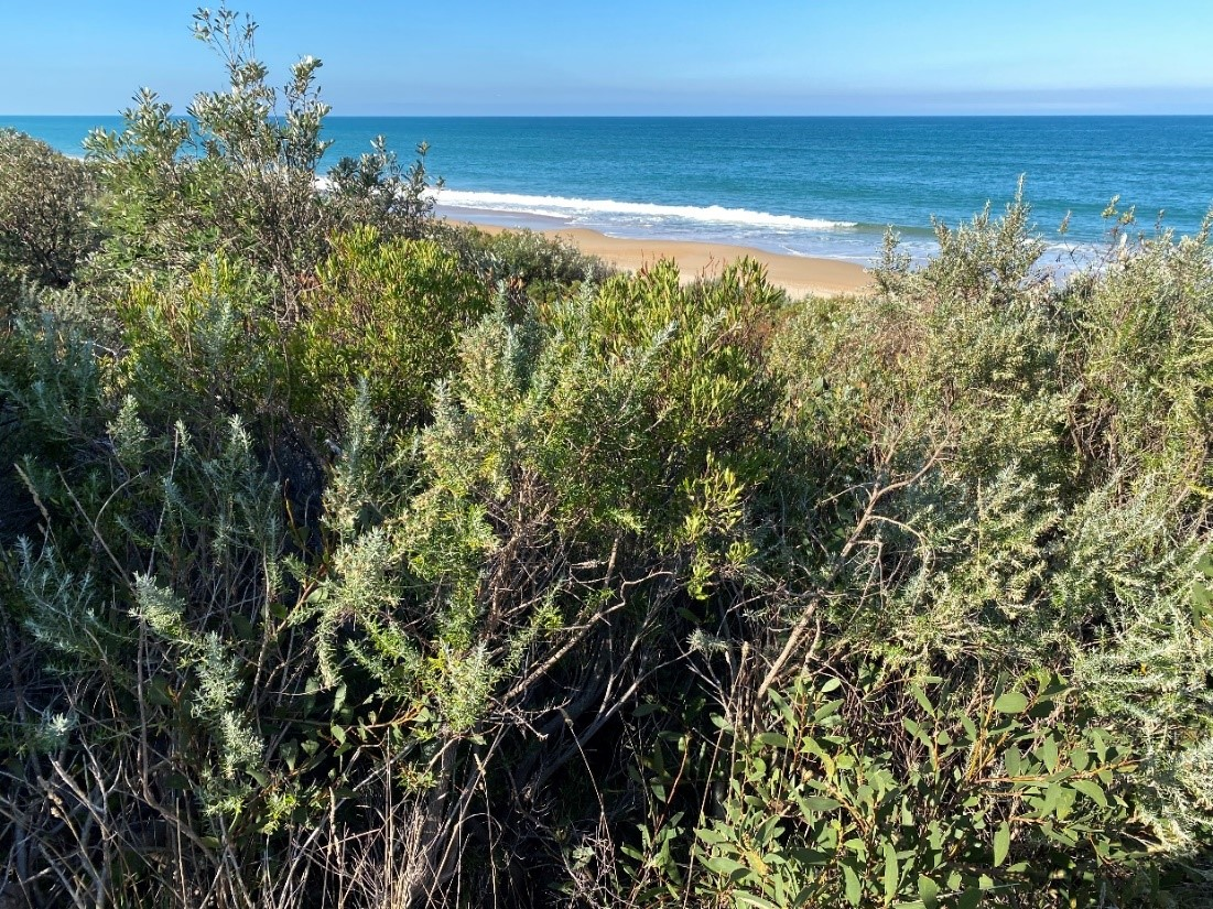 Image along a trail from developed Paradise Beach to an undevelopable subdivision